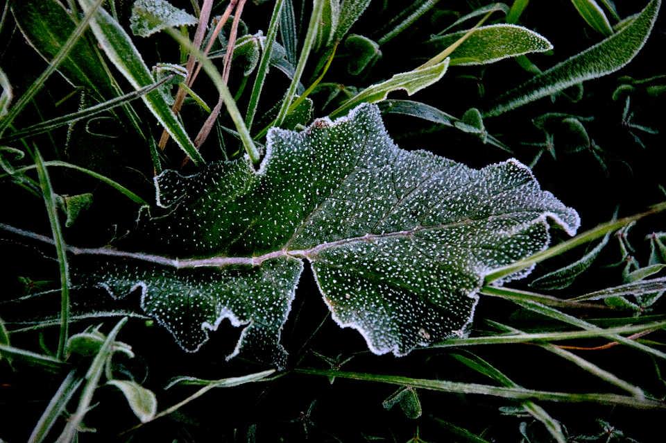 gefrorenes Blatt. Winter an der Algarve