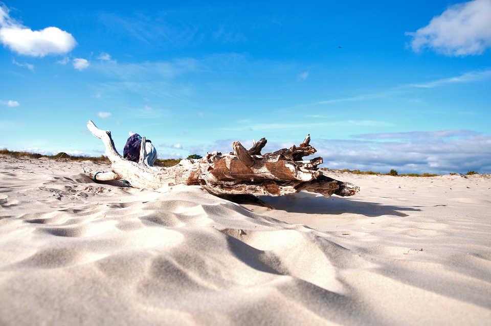 Strandgut stamm Sandstrand