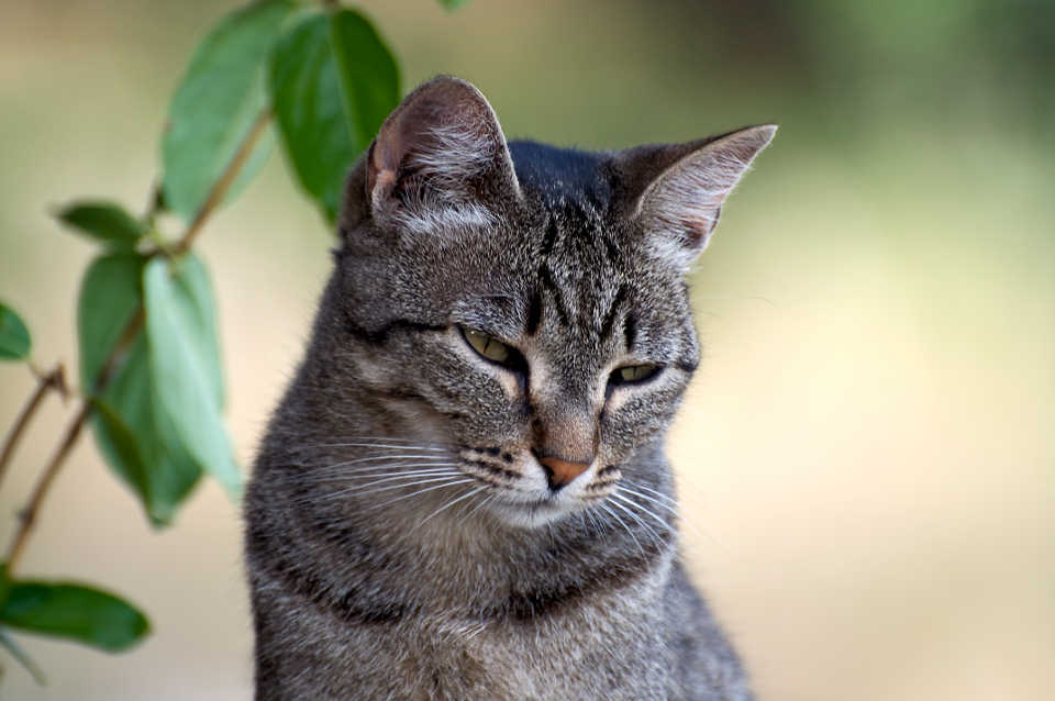 Wir dachten Katzenbild geht immer